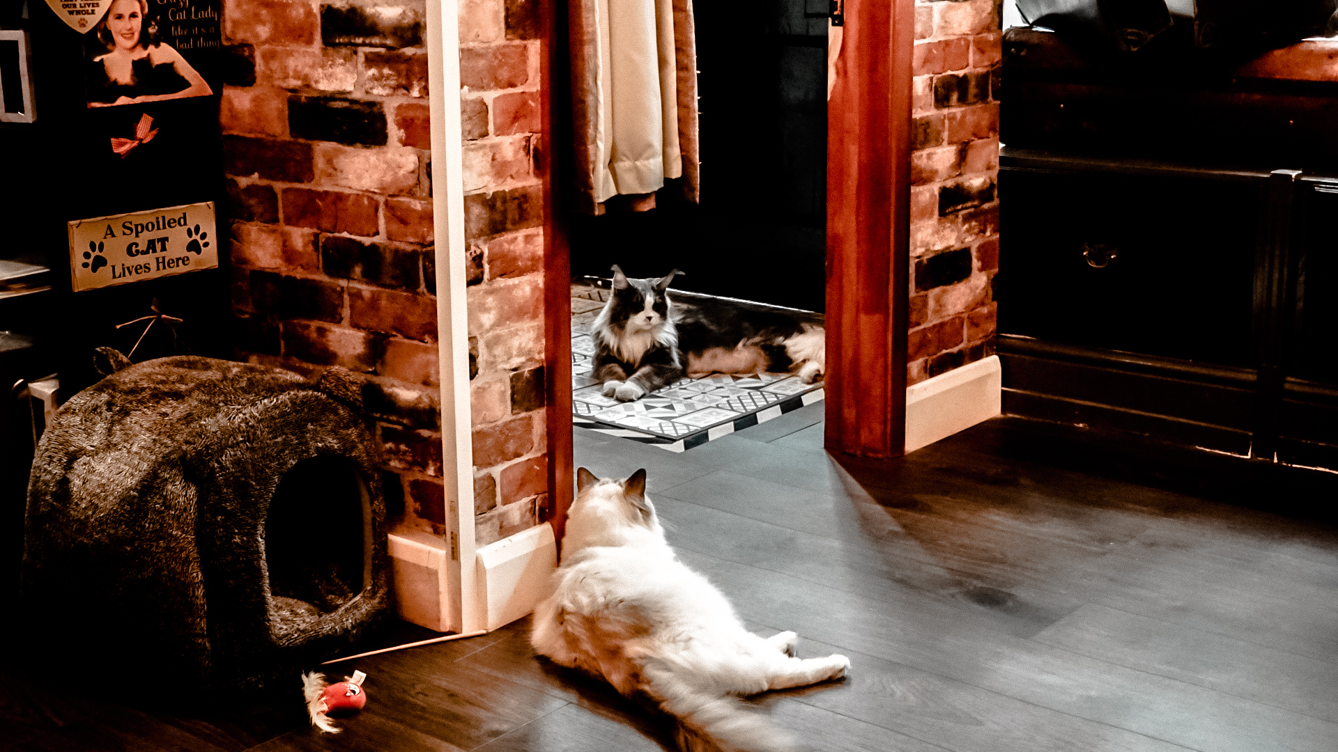 Steampuss Cat Lounge Cat Cafe