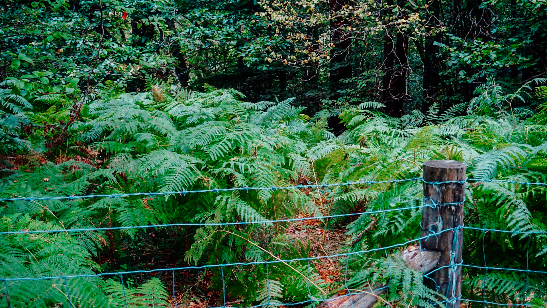 Mallyan Spout Waterfall North York Moors